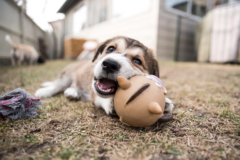 puppy #4