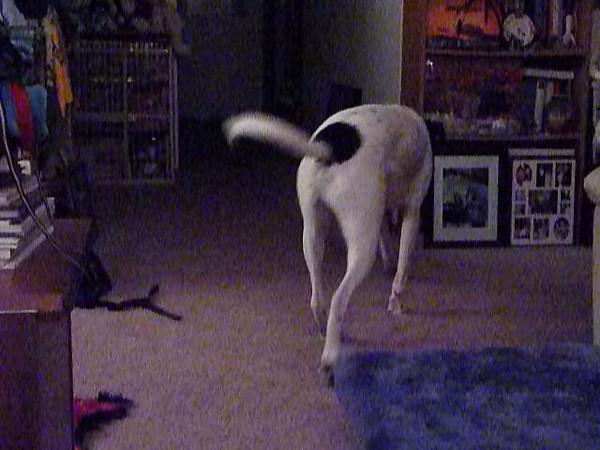 CRAZY DOG!!!