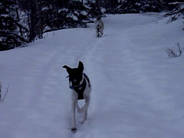 Koda and Nikita - Eklutna Lake, 5 March 09