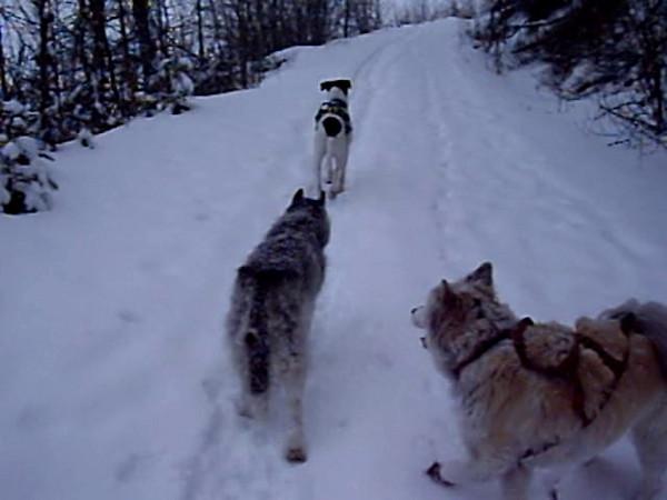 Puppies - Eklutna Lake, 5 March 09
