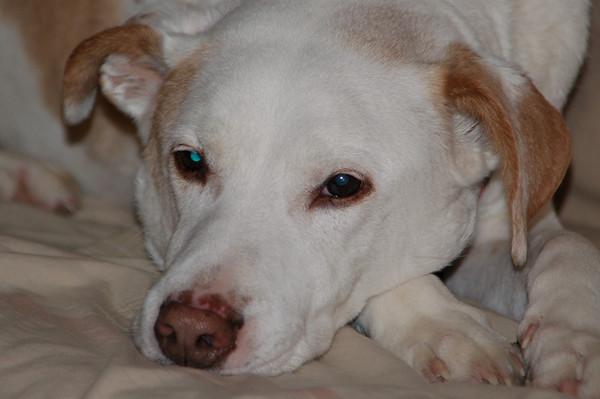 Samson (9 June 1994-21 Sept 2009)