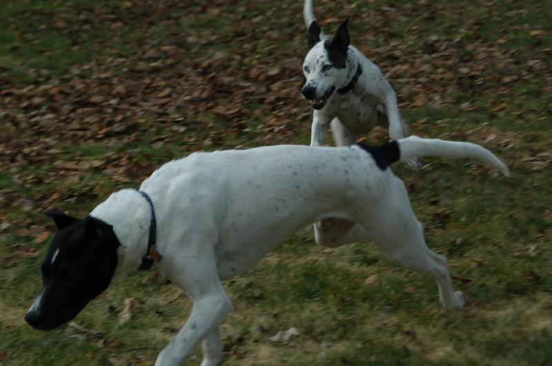 Run Koda!  Run!