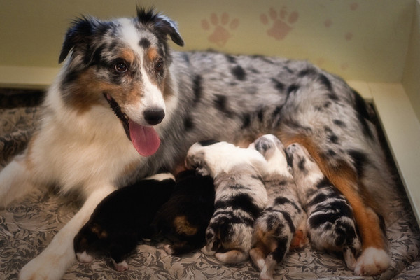 Zoe and her pups
