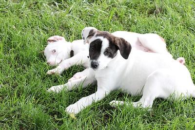 6-9-19 Puppies 18