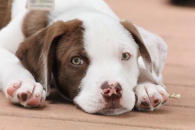 6-9-19 Puppies 5
