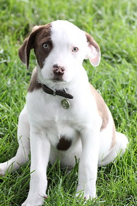 6-9-19 Puppies 17