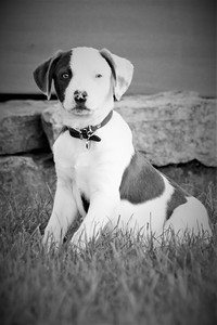 6-9-19 Puppies 21