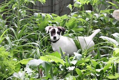 6-9-19 Puppies 2