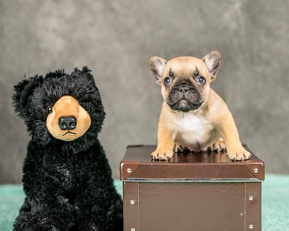 puppies-41
