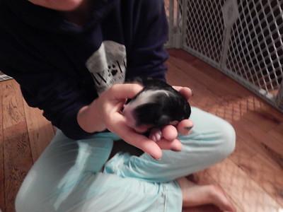Puppy #2