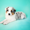 Puppy Love Portraits