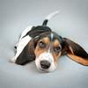 Puppy Love Portraits