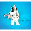 Siberian Huskey Mencer Photography-4