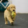 Yellow Tail Girl 3