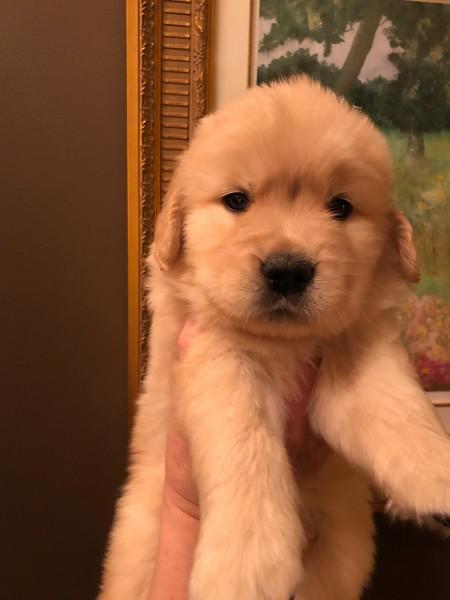 Puppy Girl - Pink