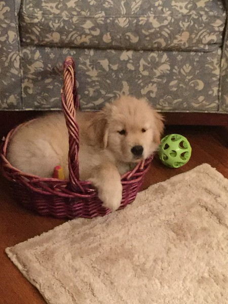 Reilly proving he can fit in the basket!