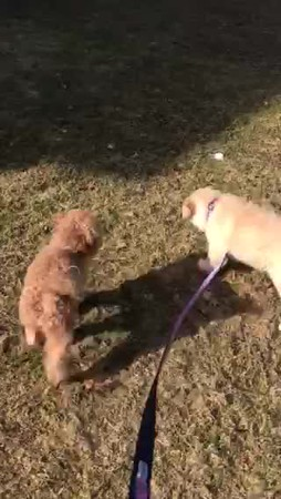 Miss Pink meeting her new family member Ginger!