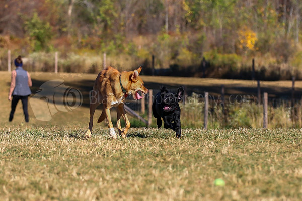 Puppy Playdate 9-30-17_0003