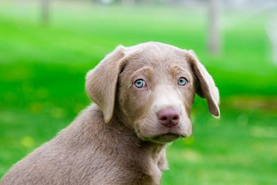 puppy-7
