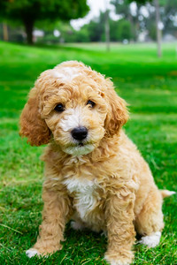 puppy-18