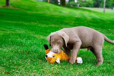 puppy-17