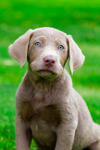 puppy-9