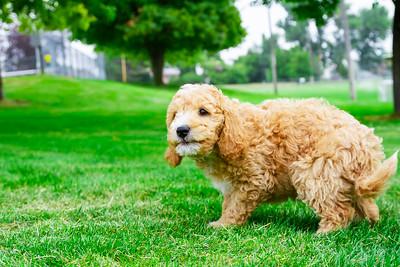 puppy-28