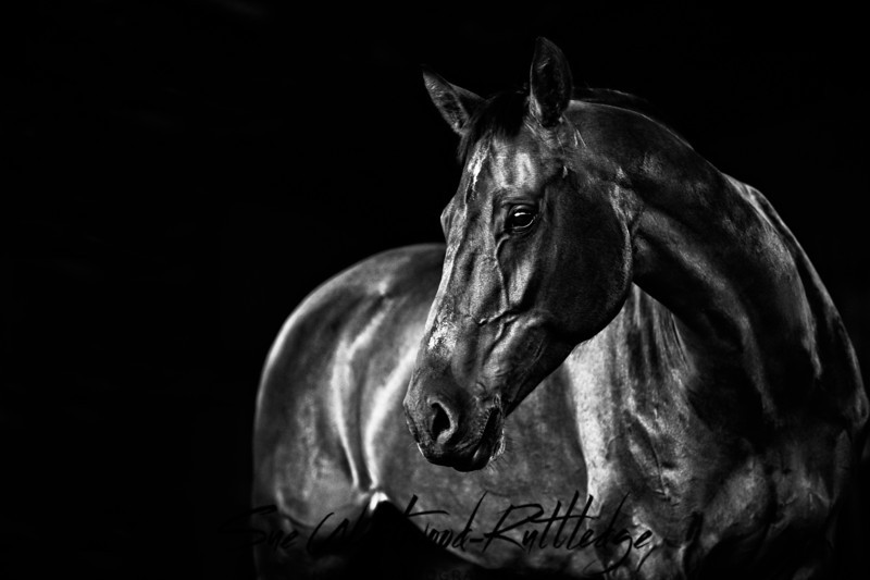 Purchase equine fine art browse and purchase fine art horse photography