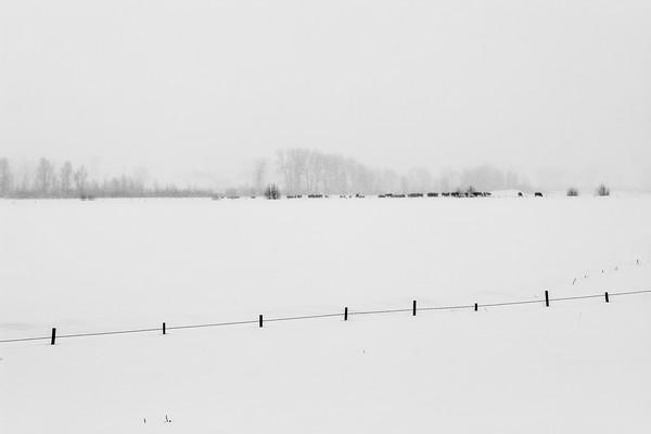 Snowstorm Pasture