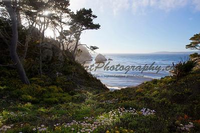 Sunbeams on Flowers, Point Lobos, California