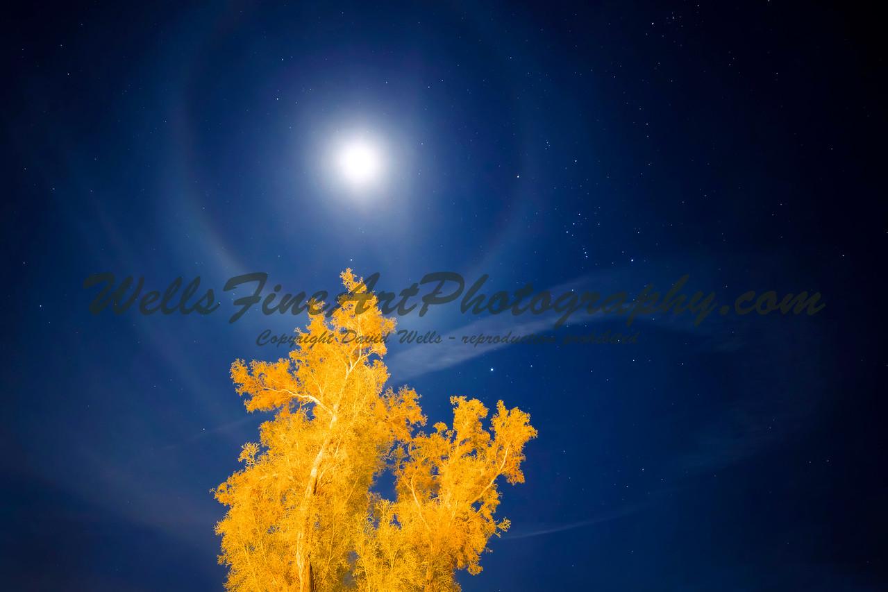 Moonring and Smoke Tree, Anzo-Borrego California