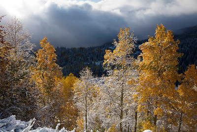 Sundays and Snow on Aspens, Wasatch Range Utah