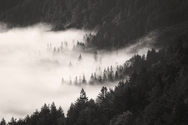 Early morning mist from Thirlmere Lake