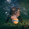 Underwater-Dog-Portraits-Jason-Chambers