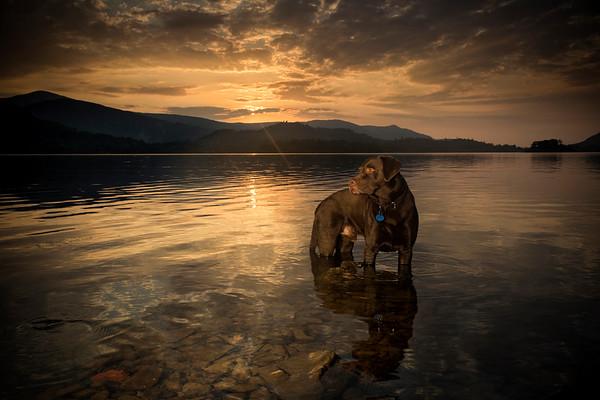 Lake District Dog Portrait