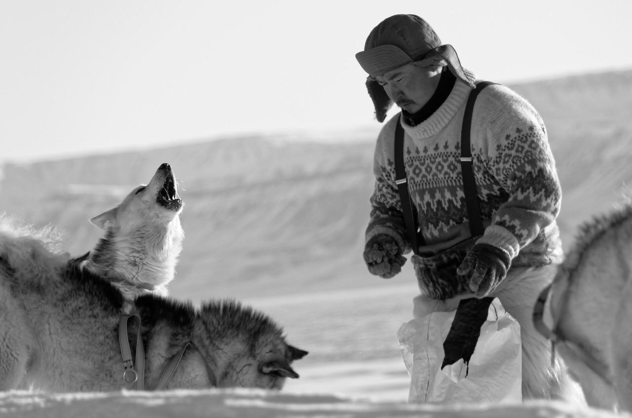 Wolves feeding