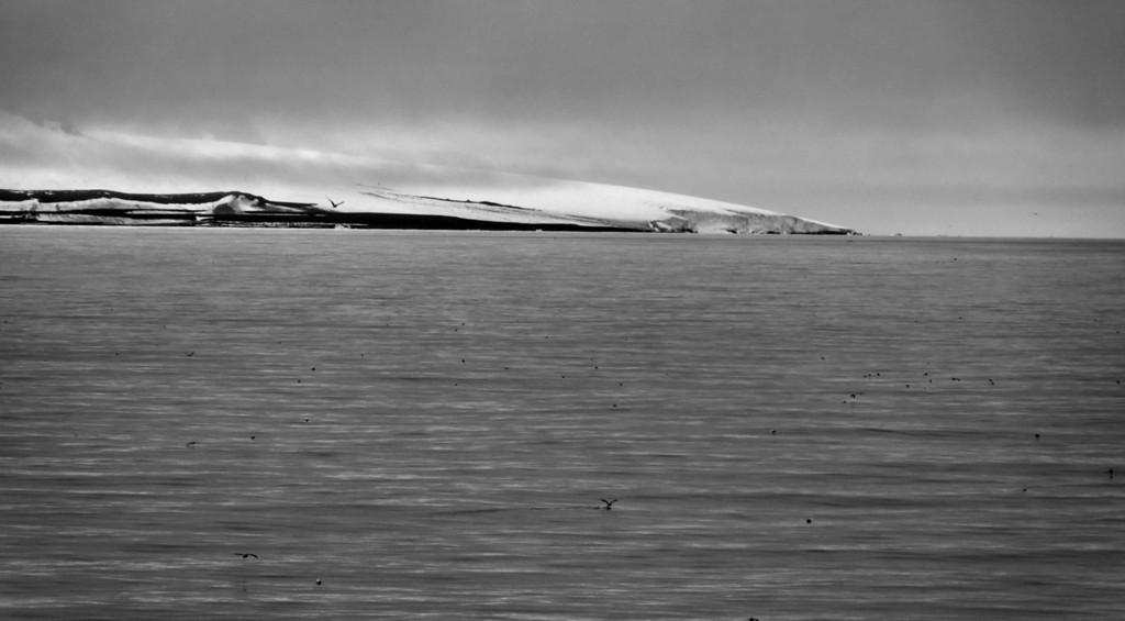 Sea birds floating in front of SE coast of Mabel Island, Franz Josef Land