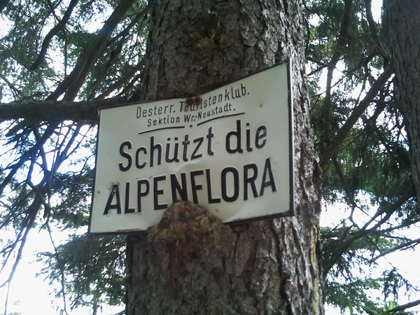 Protect the alpine flora (seems to not hold for this tree).