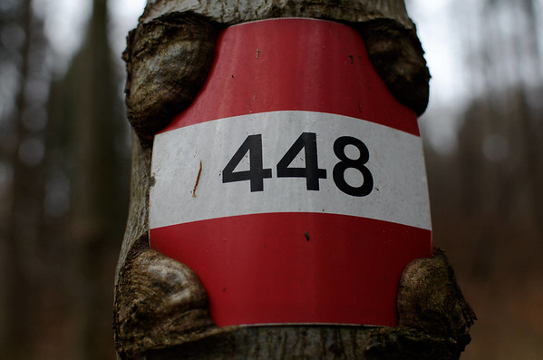 448 grown tightly into the tree.
