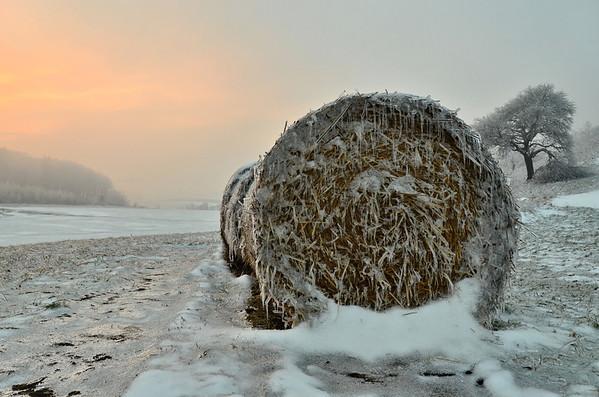 Ice rain plated straw bales, Wienerwald, Austria