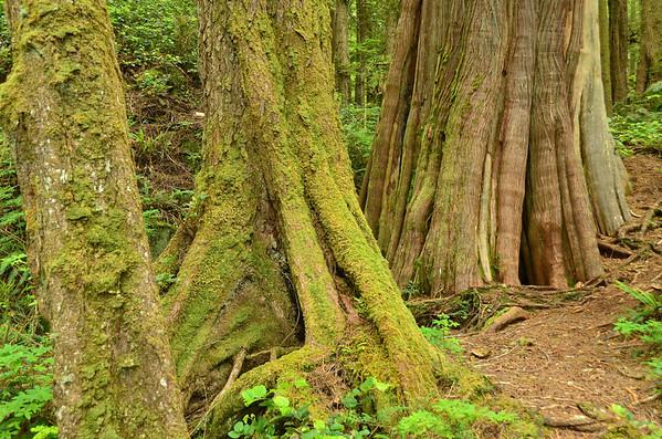 Rainforest, Clayoquot Sound, Vancouver Island