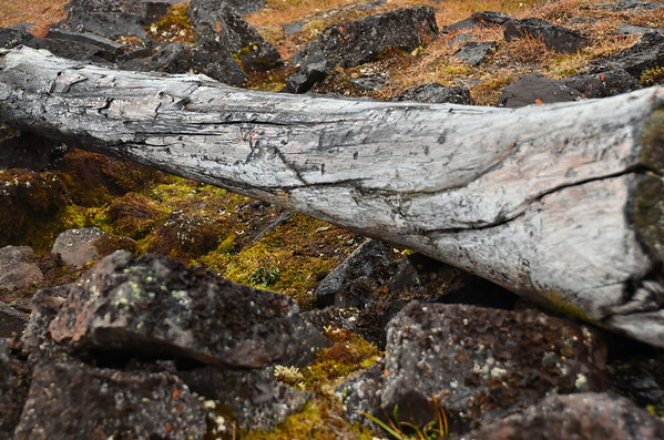 Pure isolation: 6 months in cold and dark Arctic winter - this is the beam of Nansen's and Johansen's winter hut from 1894-95, Jackson Island, Franz Josef Land
