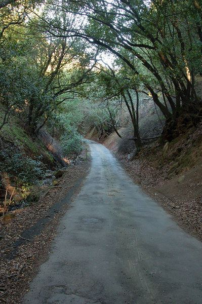 ...Two roads diverged in a yellow wood, and I-- I took the one less traveled by, And that has made all the difference. (Robert Frost)