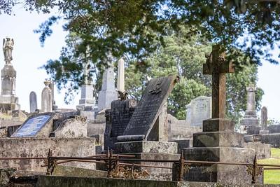 Purewa Cemetery Photographic Walk