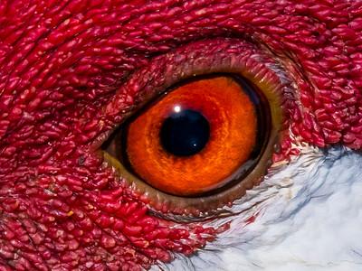 Birds Eye - David Warren