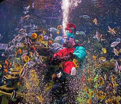 Aquarium Elf - Joe  Collavita