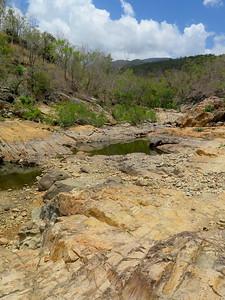 Alligator Trail