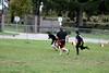 102111-Quest-Football-290