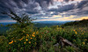 The Forever View - Queen Wilhelmina State Park - July 31, 2017