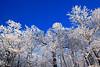 Ice Tree's - Queen Wilhelmina State Park